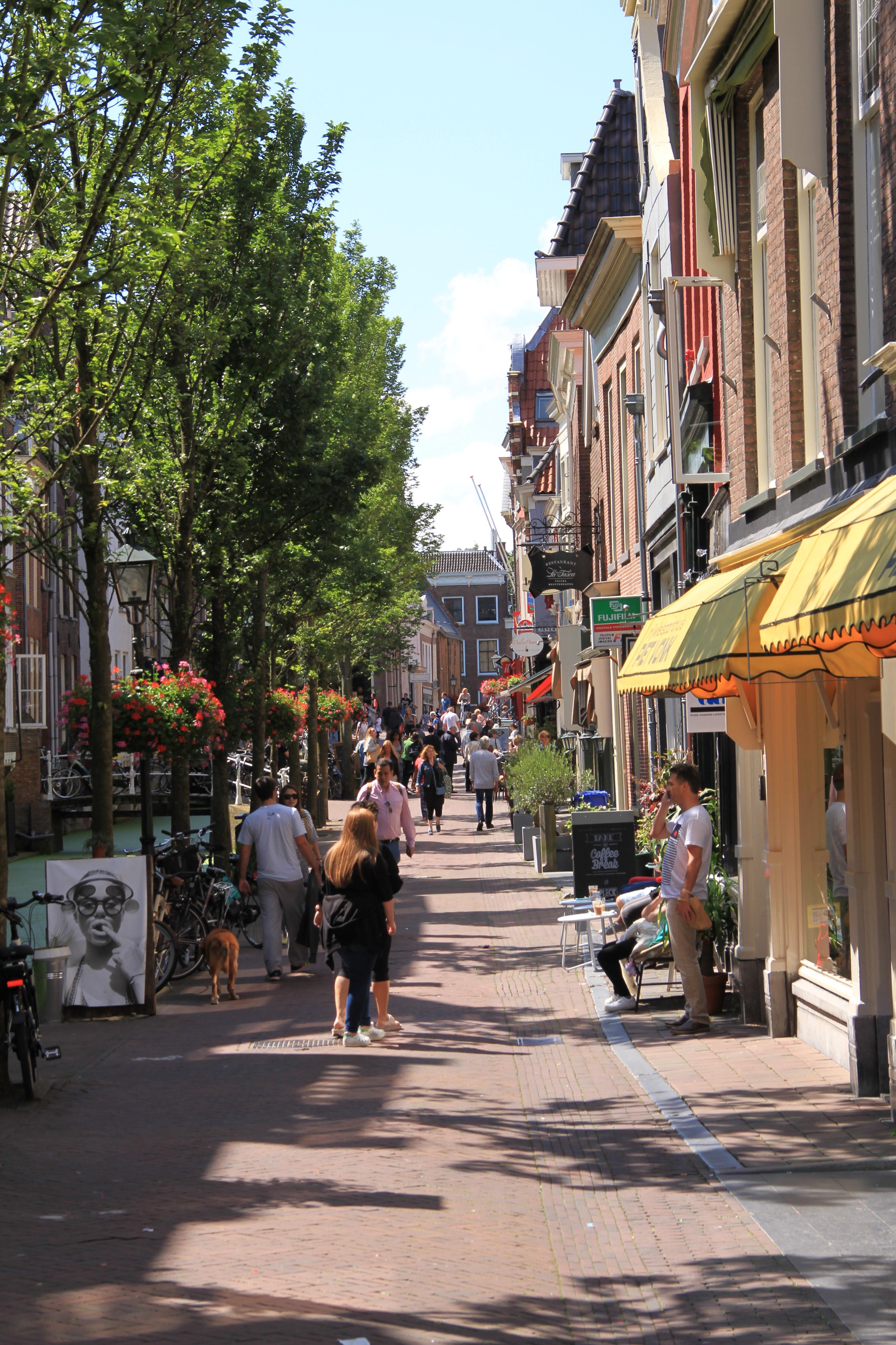 Delft_Tulipando