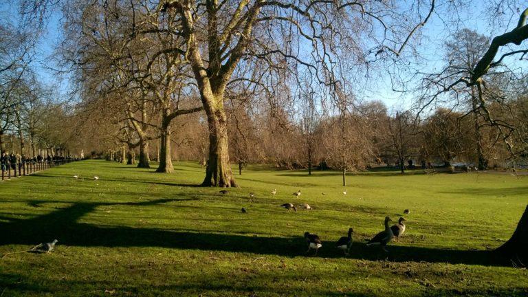 Treepedia Londra Tulipando