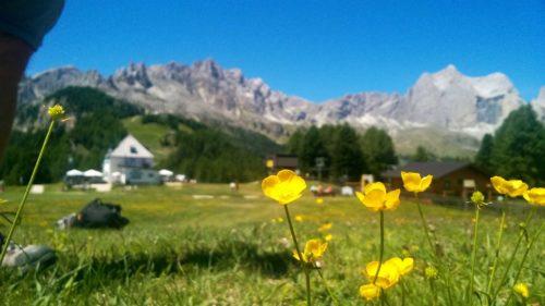 catinaccio altopiano Dolomiti_Tulipando