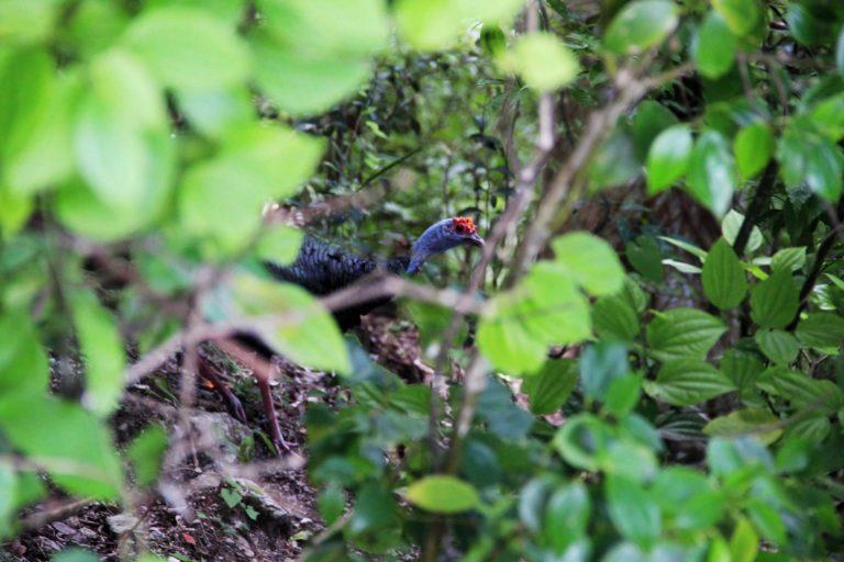 cenotes creature giungla Messico2017_Tulipando