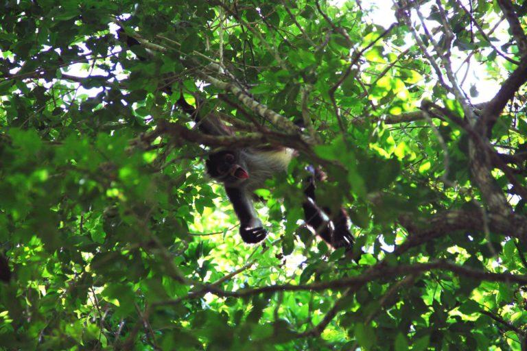 cenotes scimmia Messico2017_Tulipando