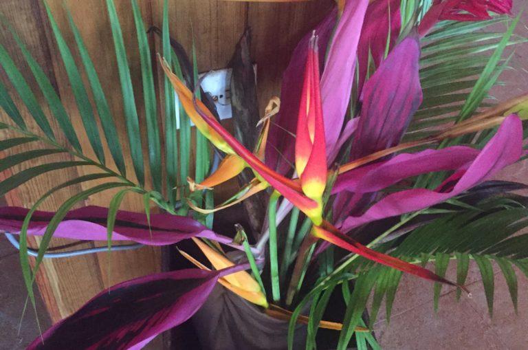 Fiore Ginger Honduras Io Viaggio con_Tulipando