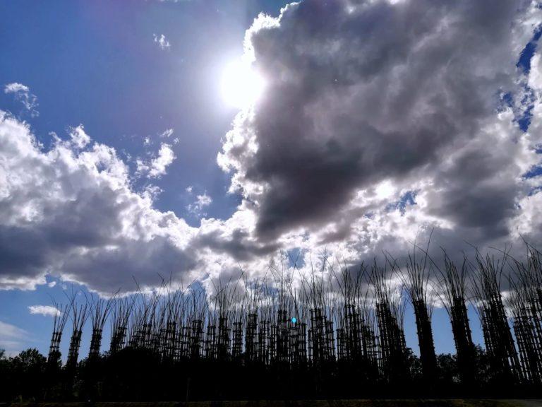 Cattedrale Vegetale Lodi skyline_Tulipando