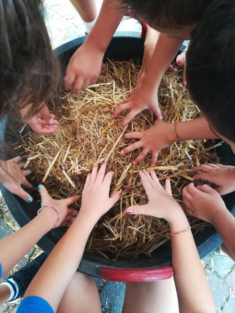 Cerca i Tappi Festa dell'Uva_Tulipando