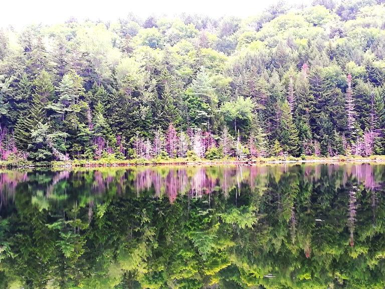 White Mountains New England_Tulipando