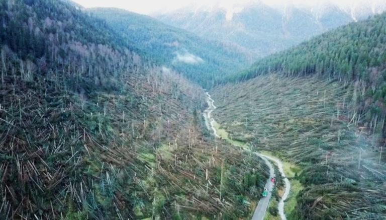 Foresta distrutta Veneto