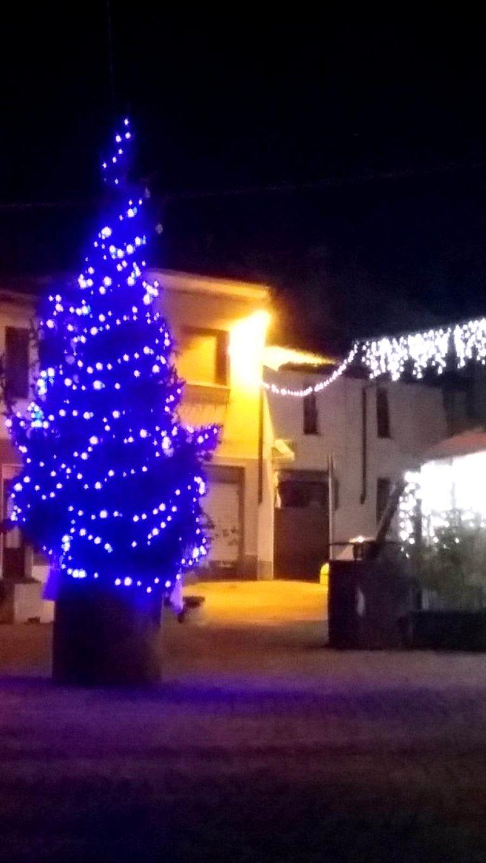 Abete Veneto decorato a Miradolo Terme_Tulipando